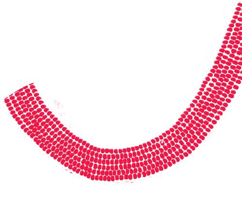 curva-rossa